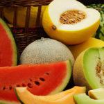 Conseils, les variétés de melon