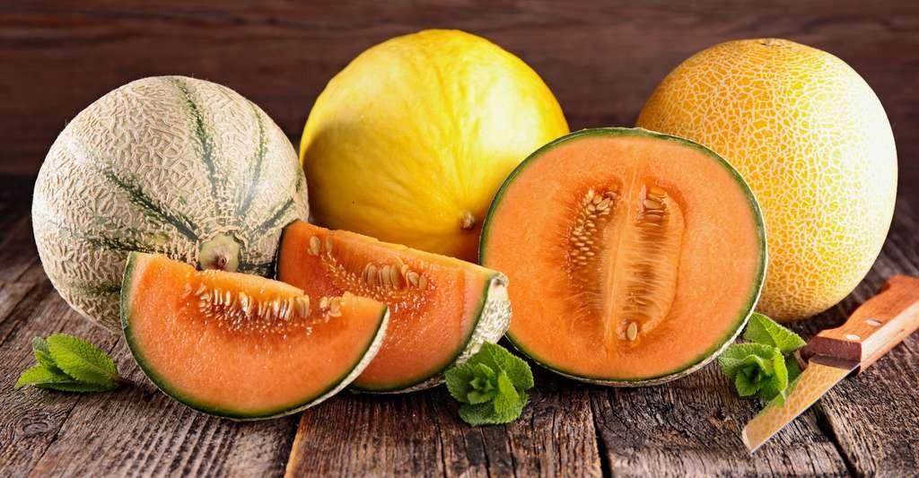 Différents types de melon