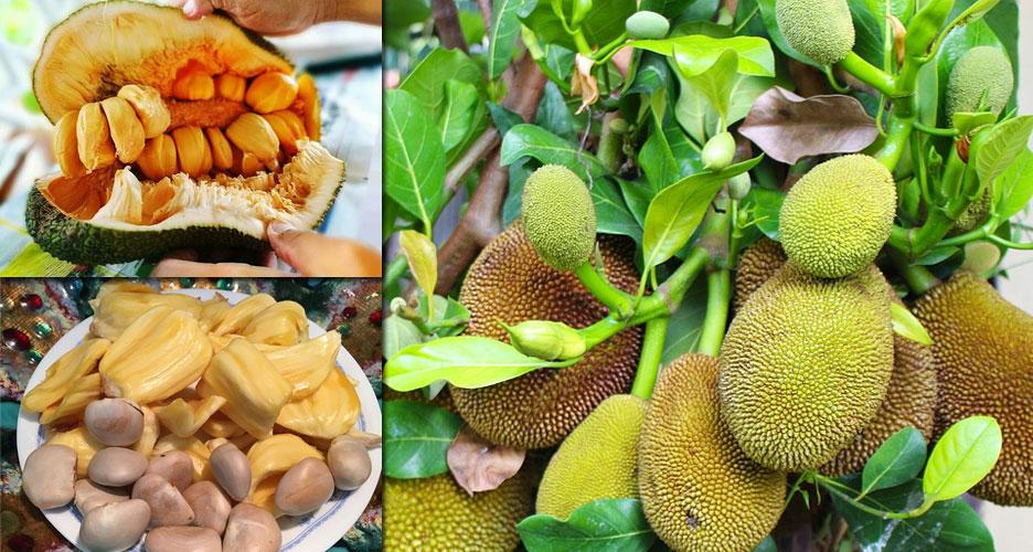 Un fruit unique et aux multiples vertus santé
